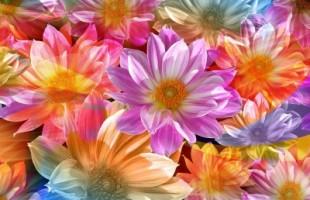 1477088-art-flowers-400x270-MM-100